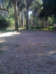 Degrado al Parco Robinson - Fuorigrotta